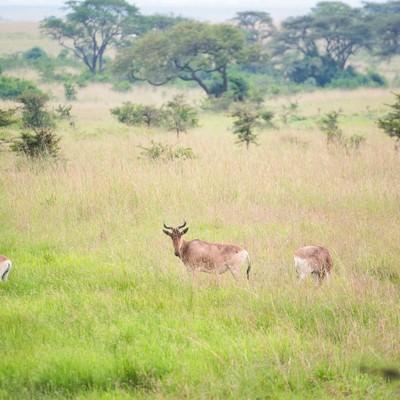 「草原を生きる野生動物の群れ」の写真素材