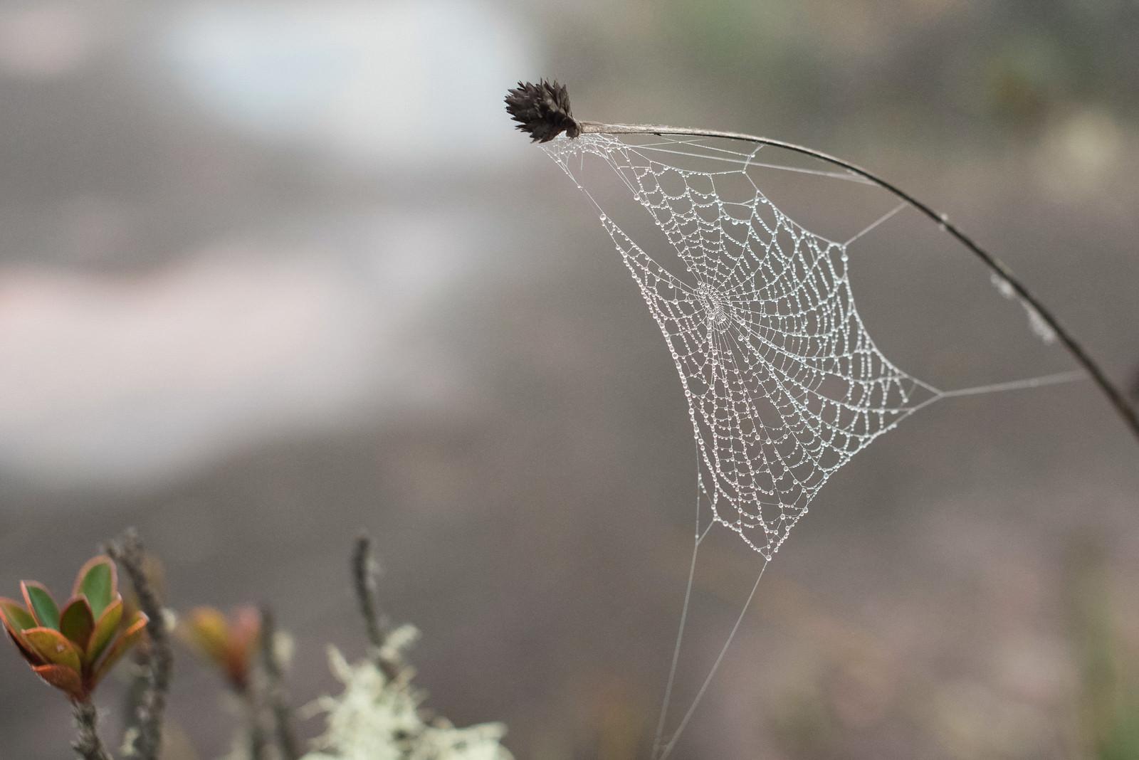 「雨上がり雨粒が残る蜘蛛の巣」の写真