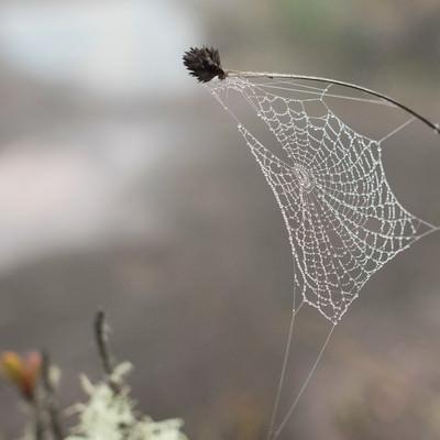 雨上がり雨粒が残る蜘蛛の巣の写真