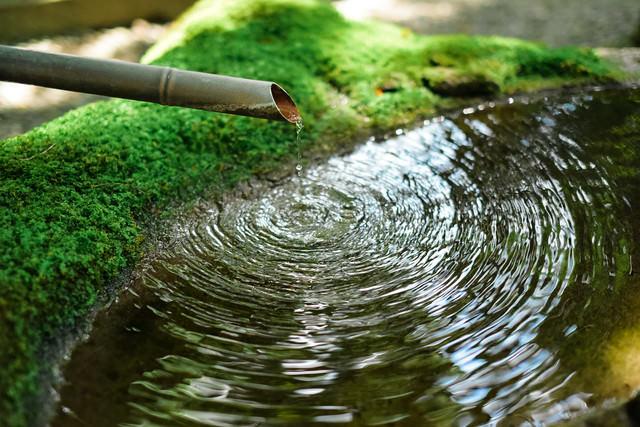 苔むした水溜りに落ちる雫からできる波紋の写真