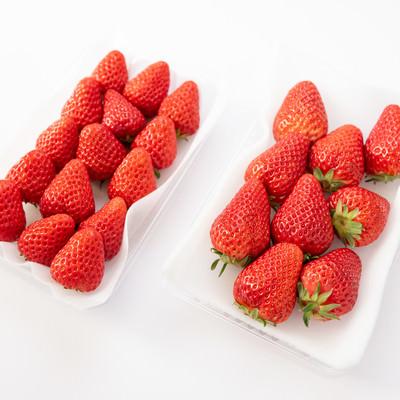 紅ほっぺ(苺)の大玉と中玉のサイズ比較の写真