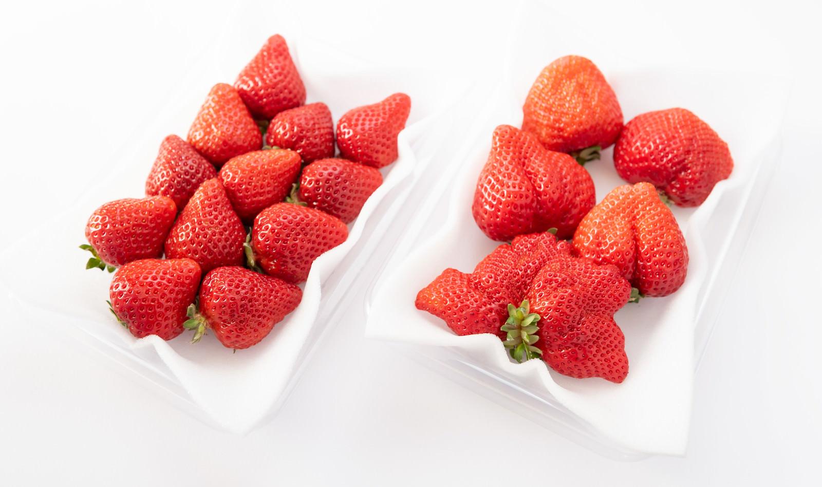 「あまおう(苺)の大粒と小粒のサイズ比較」の写真