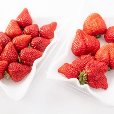 あまおう(苺)の大粒と小粒のサイズ比較の写真