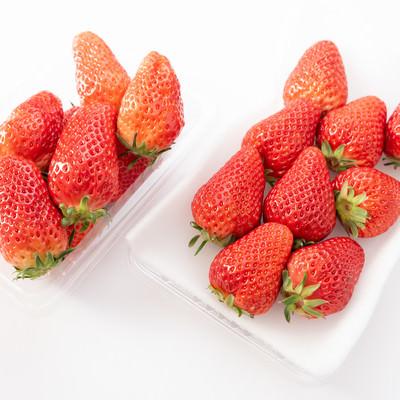 苺の品種比較(章姫と紅ほっぺ)の写真