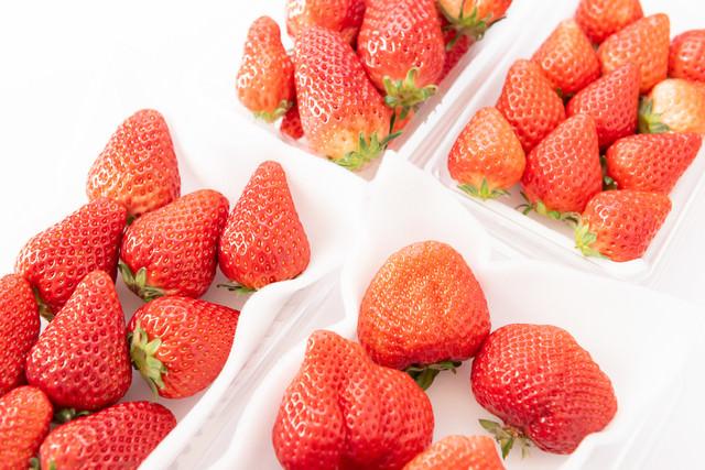 苺の品種比較(章姫、さがほのか、紅ほっぺ、あまおう)の写真