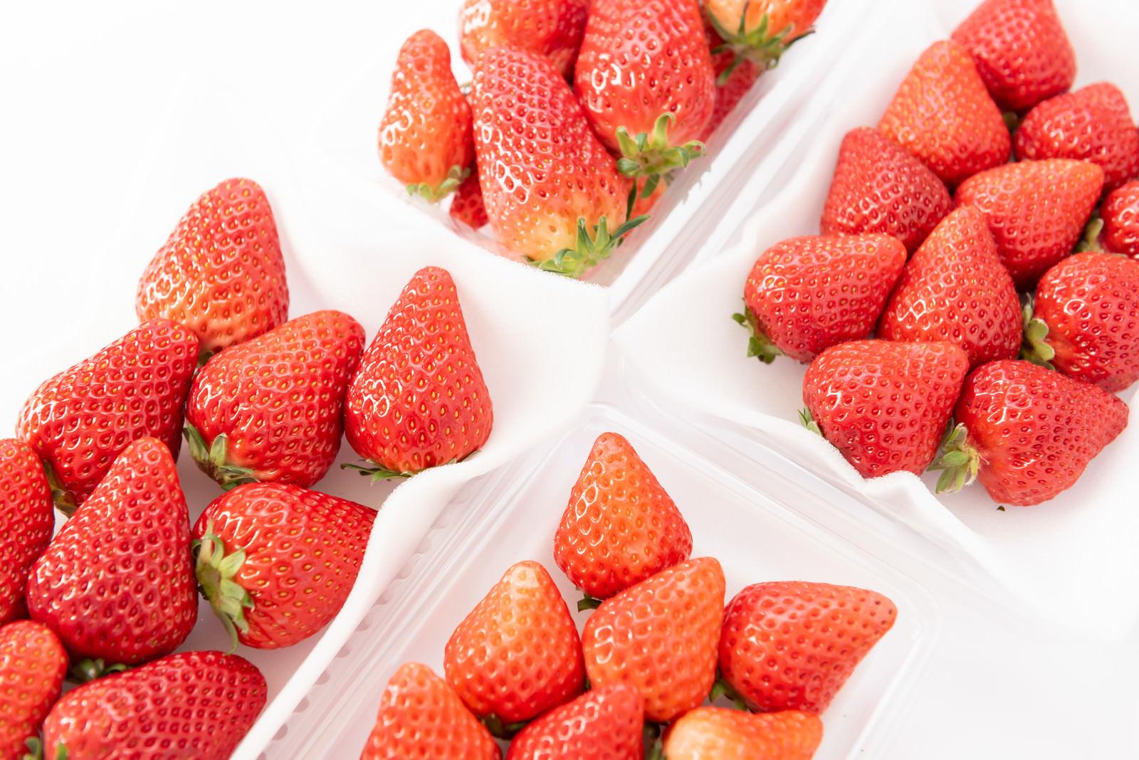 「苺のサイズ比較(章姫、紅ほっぺ、あまおう、さがほのか)」の写真