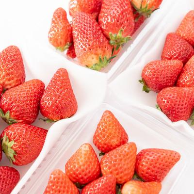 苺のサイズ比較(章姫、紅ほっぺ、あまおう、さがほのか)の写真