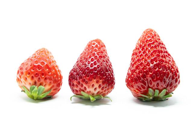 苺のサイズ比較(さがほのか、とちおとめ、紅ほっぺ)の写真