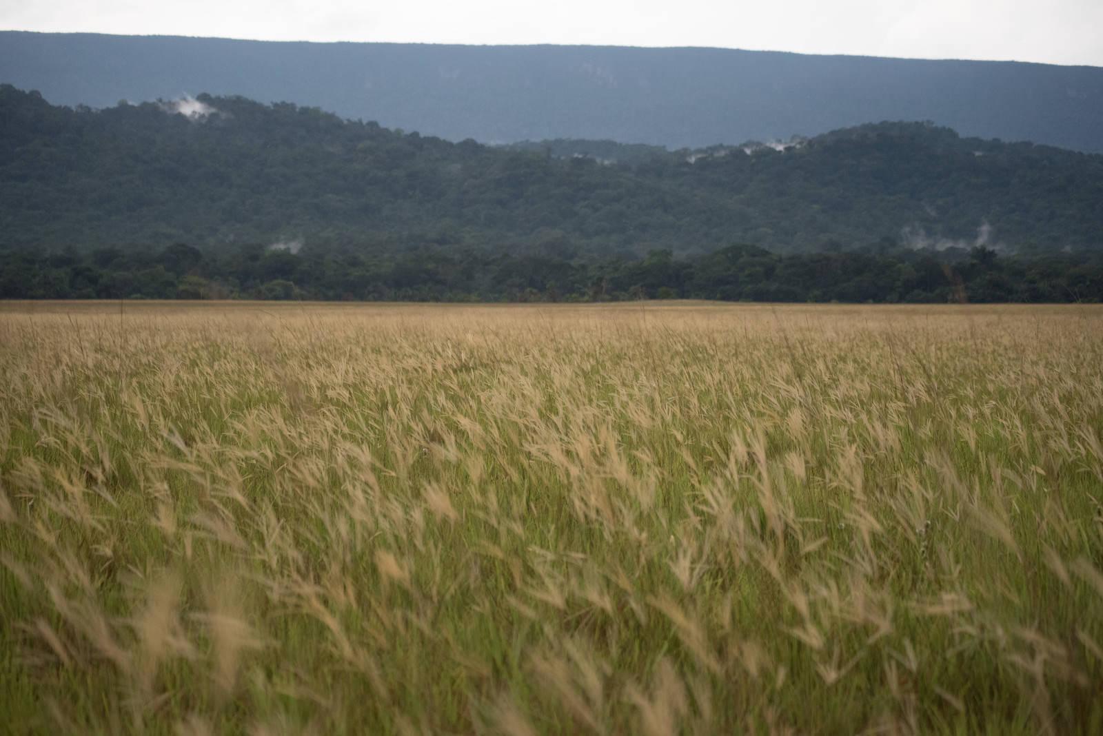 「一面の草原」の写真