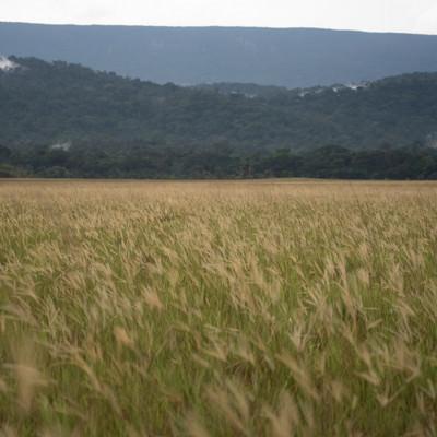 「一面の草原」の写真素材
