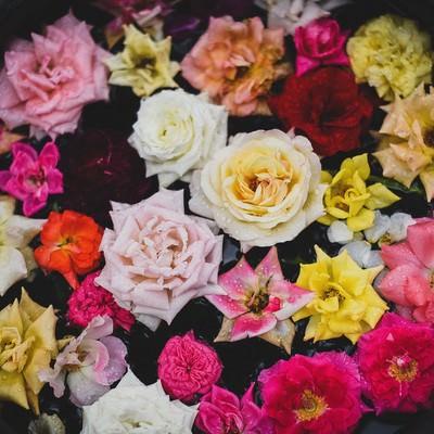 鉢の中の薔薇の花の写真