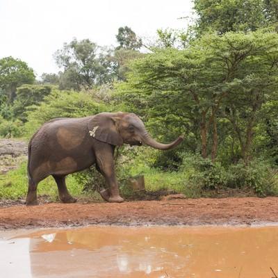 水辺の象の写真