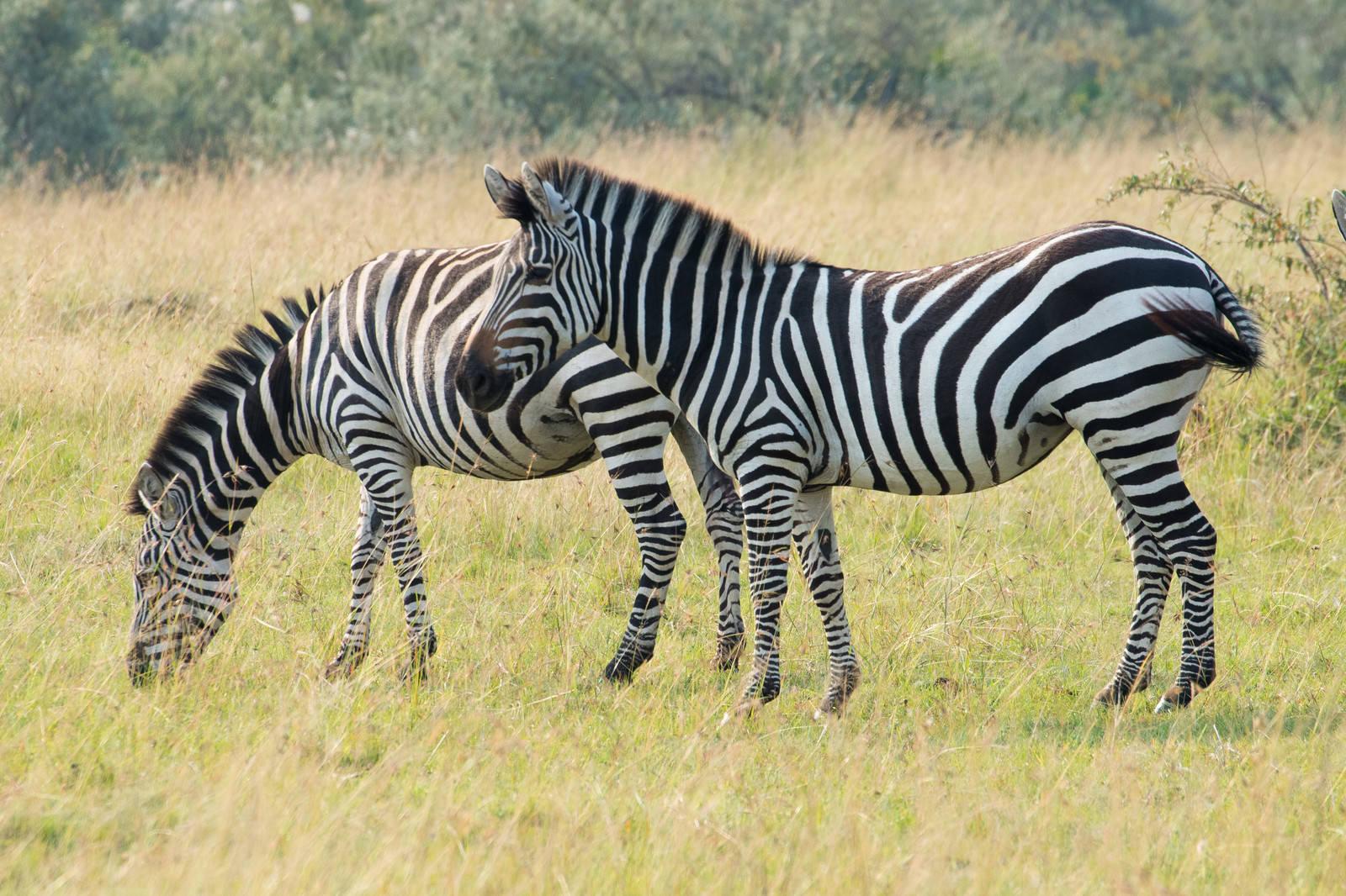 「動物 群れ フリー画像」の画像検索結果