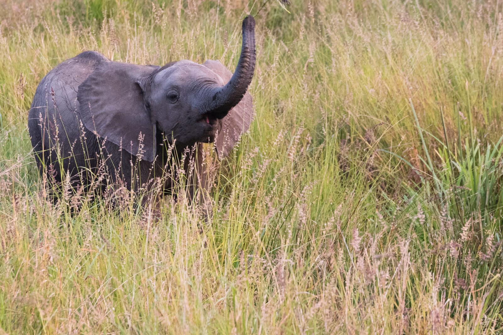「子ゾウ 写真 フリー素材」の画像検索結果