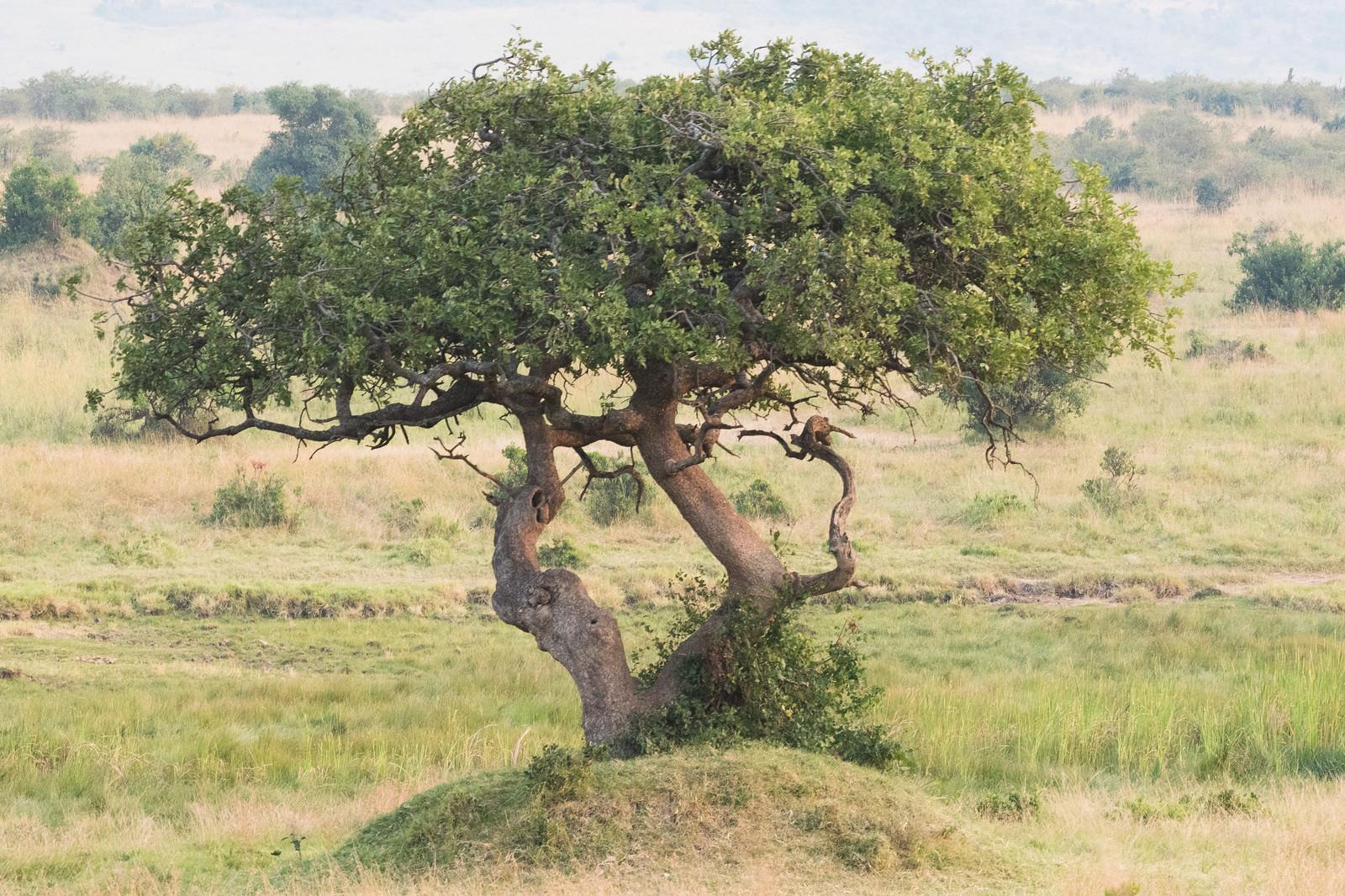 「アフリカの大地」の写真
