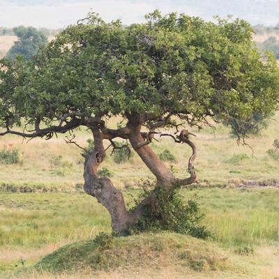 アフリカの大地の写真