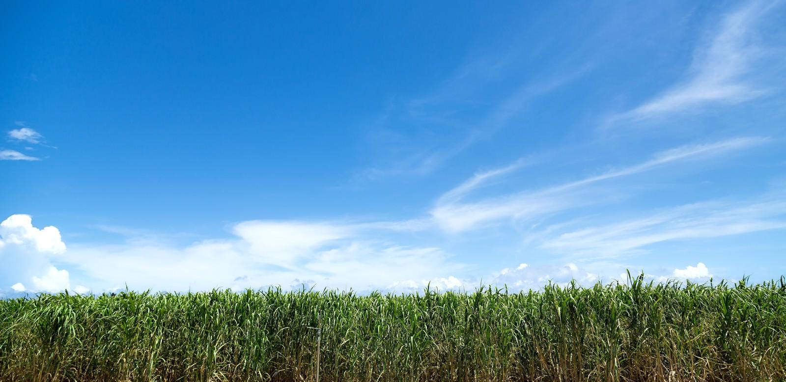 「サトウキビ畑と宮古島の青空」の写真