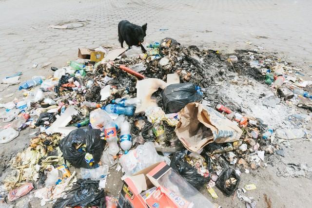 焼けたゴミと野犬の写真