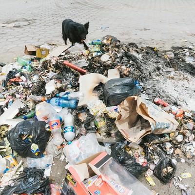 「焼けたゴミと野犬」の写真素材