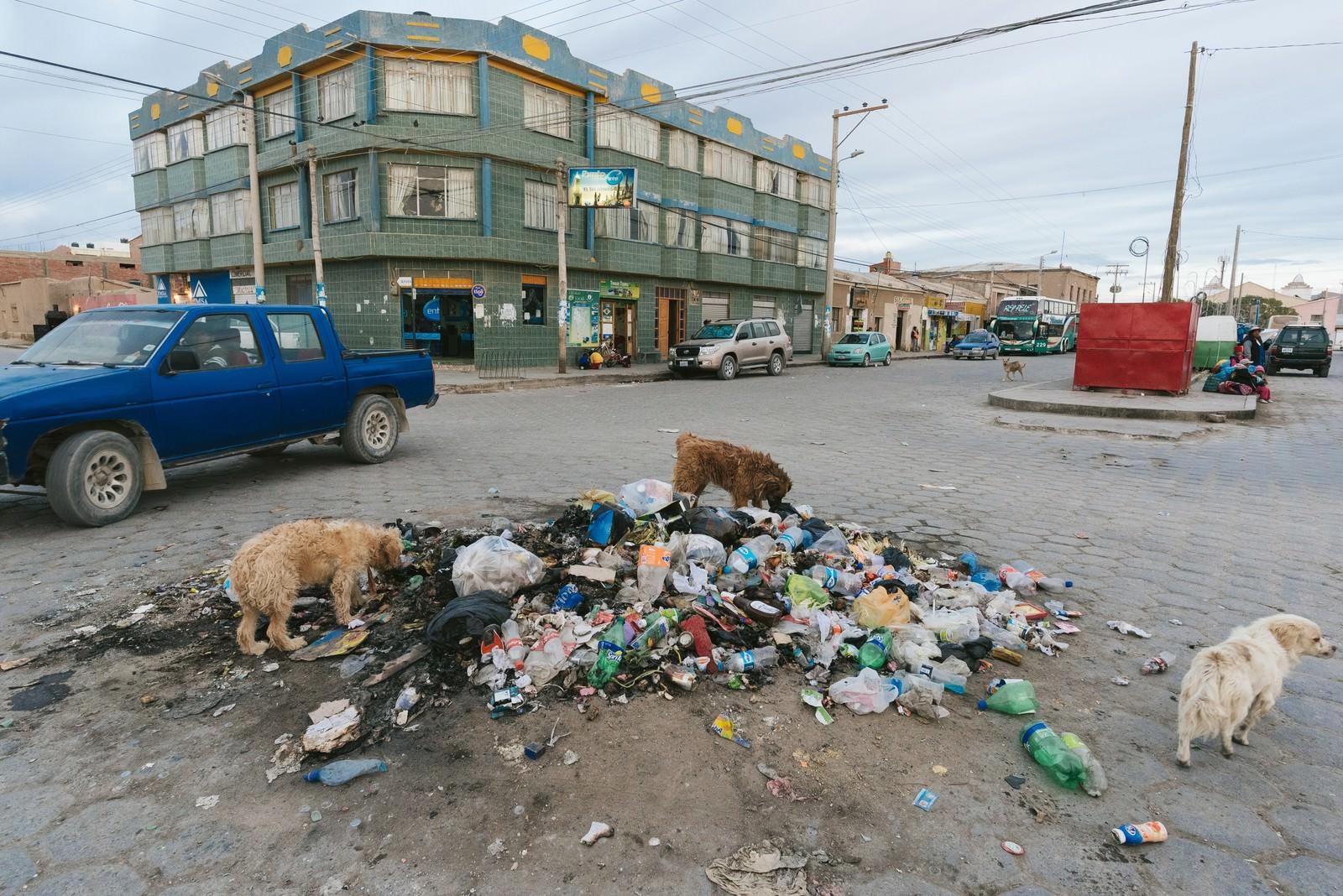 「ウユニ市街のゴミを漁る野犬」の写真