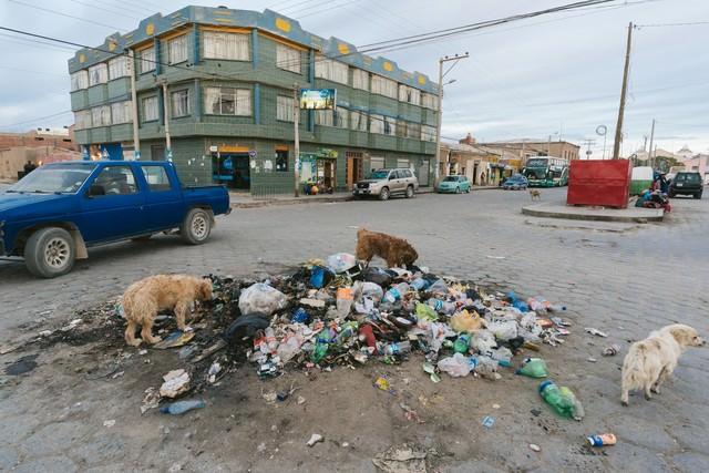 ウユニ市街のゴミを漁る野犬の写真