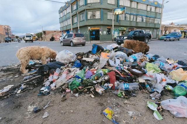 散乱するゴミを漁る野犬達(ウユニ市の現状)の写真