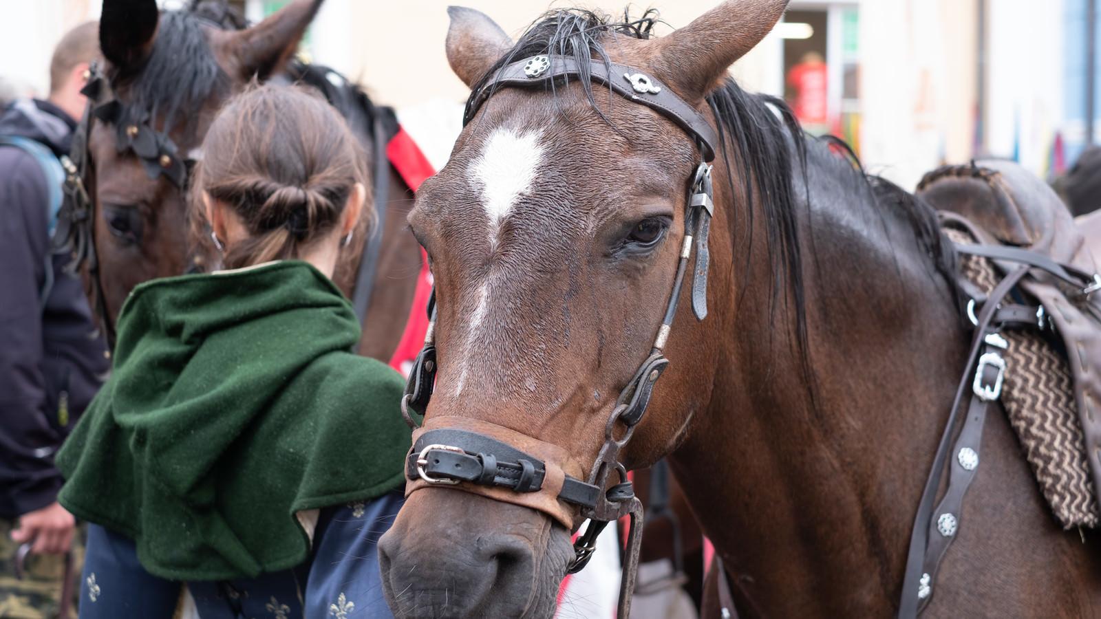 「ミクロフで見かけた馬(チェコ共和国)」の写真