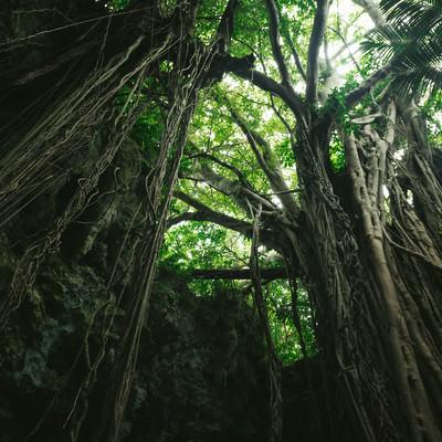 森に包まれた不思議な空間「ガンガラーの谷」(沖縄)の写真