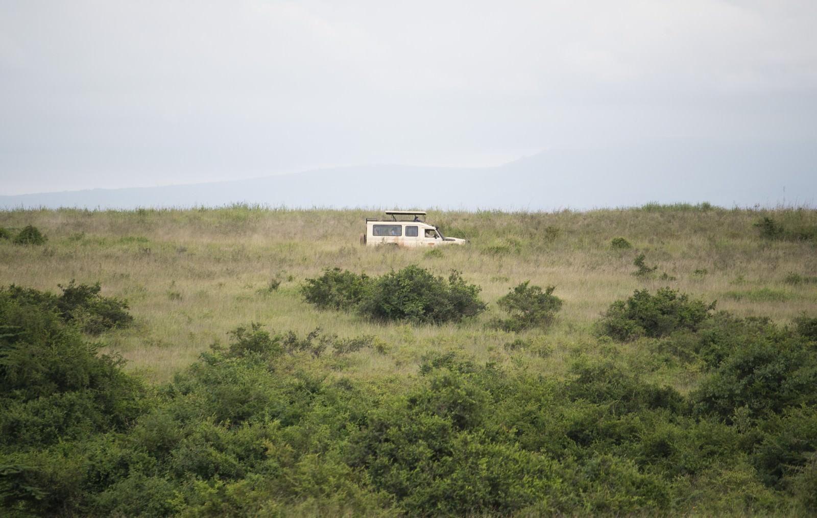 「草原を走るサファリカー」の写真