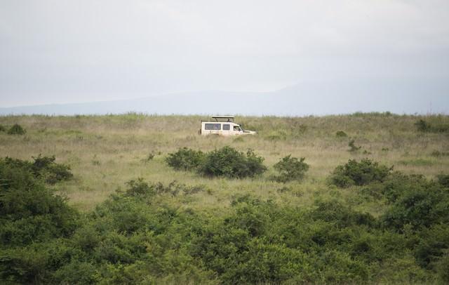 草原を走るサファリカーの写真