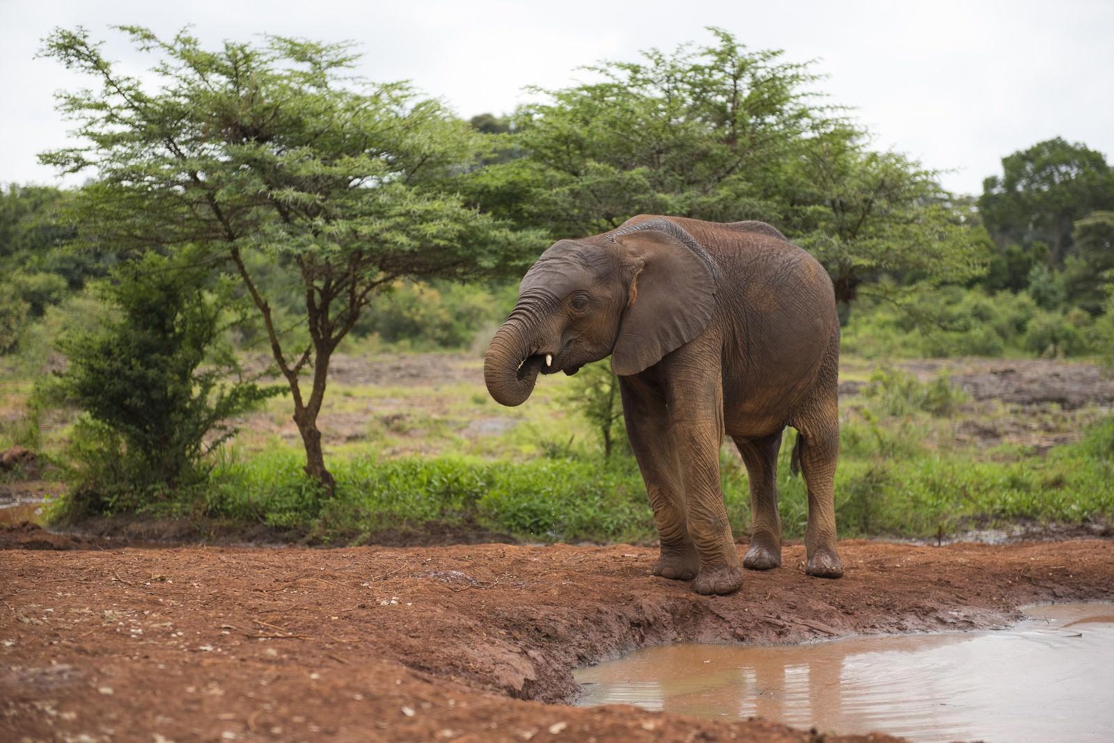 「水場に来た象」の写真