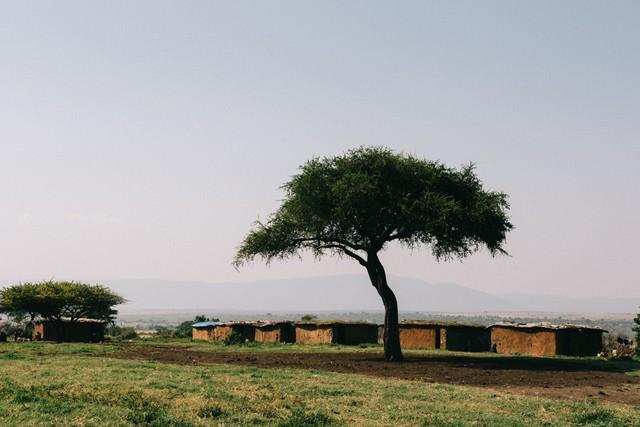 アフリカ、マサイ族の家と木の写真