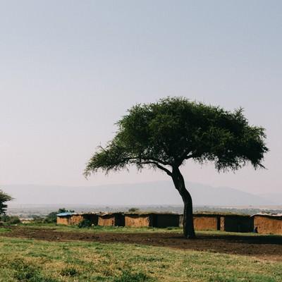 「アフリカ、マサイ族の家と木」の写真素材