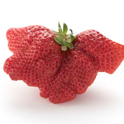 「乱形果した苺」の写真素材