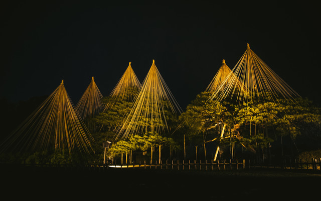 ライトアップされた雪吊りの風景(りんご吊り)の写真