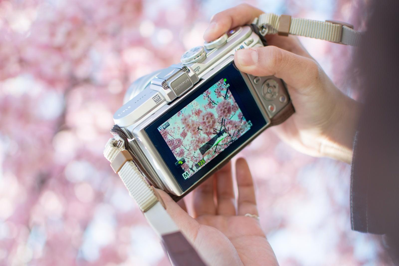 「桜の撮れ高を確認するカメラマン」の写真