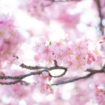 春爛漫の写真