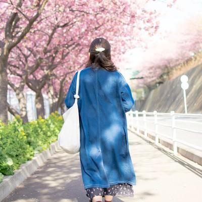 桜の道を歩く女性の後姿の写真