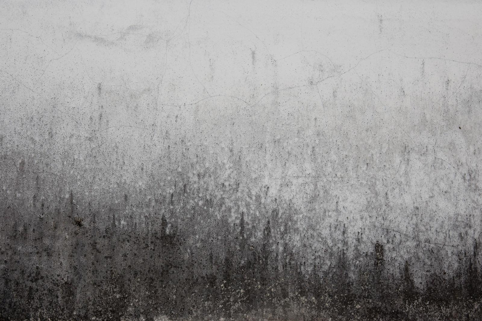 「黒くカビた壁(テクスチャ)」の写真