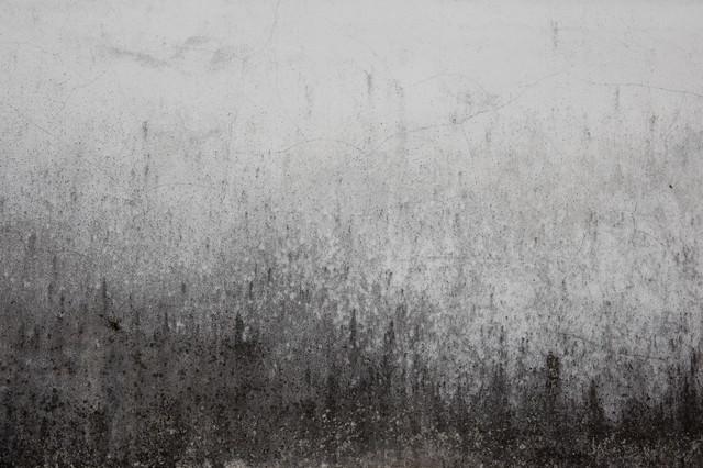 黒くカビた壁(テクスチャ)の写真