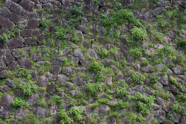 石垣の間から草が生えるの写真