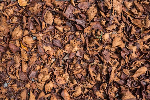 枯れ落ちた葉のテクスチャの写真