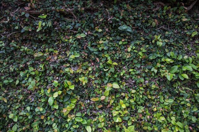 根と新芽のテクスチャの写真