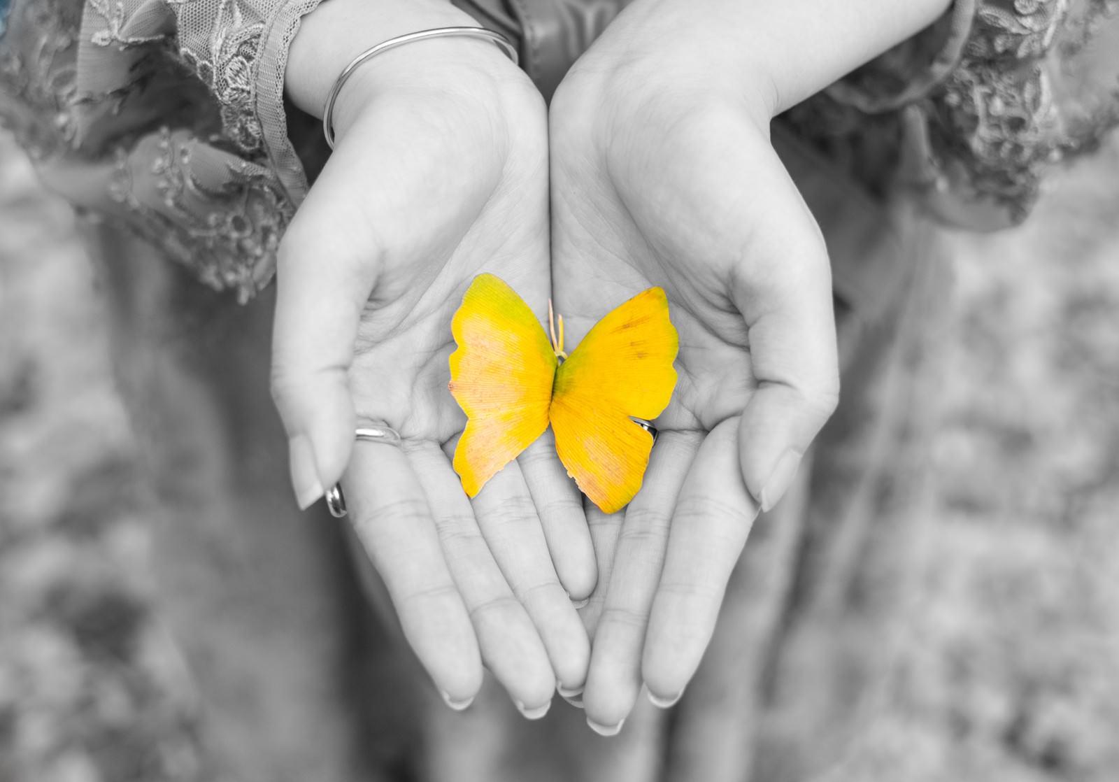 「手のひらの黄色い蝶(紅葉した銀杏の葉)」の写真