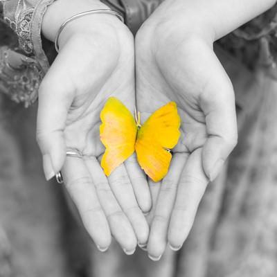 手のひらの黄色い蝶(紅葉した銀杏の葉)の写真