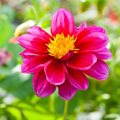 「鮮やかな赤い花」の写真素材