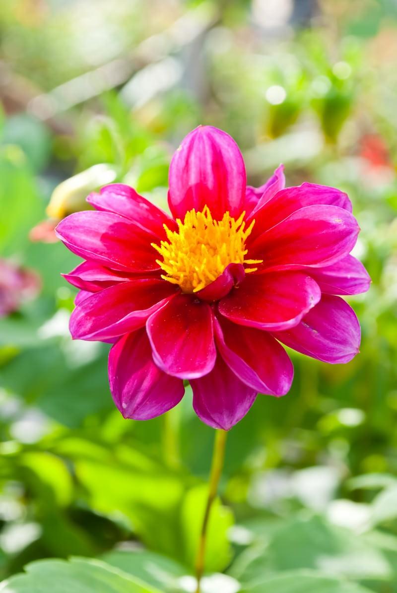 「鮮やかな赤い花」の写真