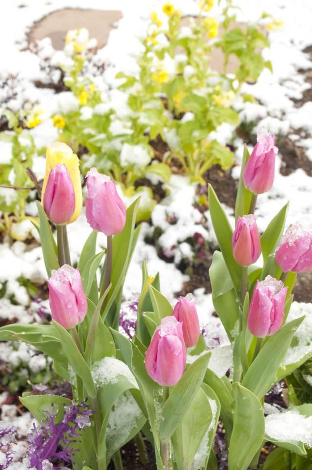 春の気配(寄せ植え)の写真