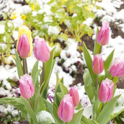 「春の気配(寄せ植え)」の写真素材
