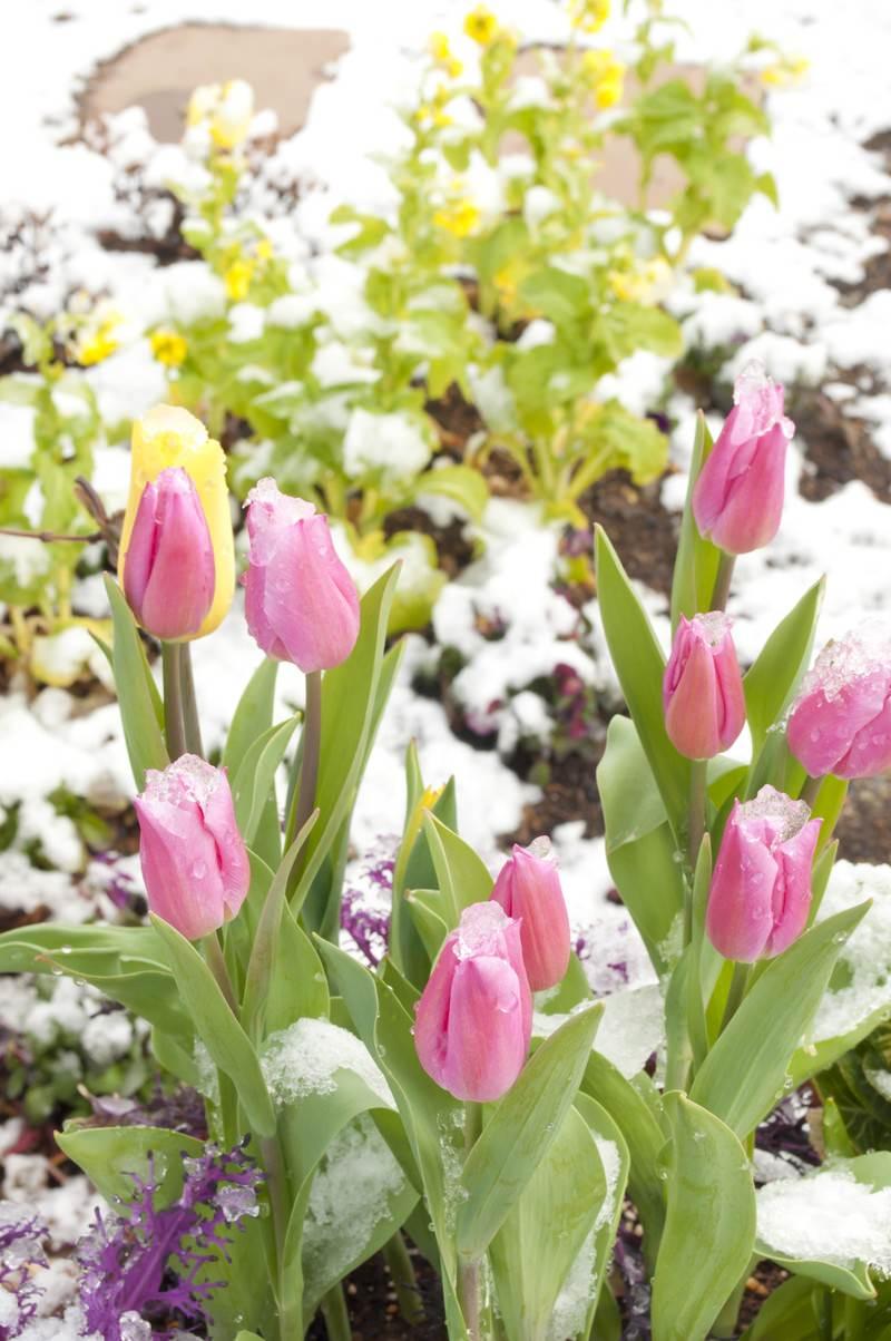「春の気配(寄せ植え)」の写真